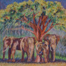 Elephants under a Newtonia tree