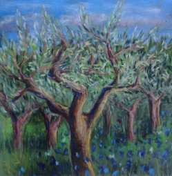 Little tree in Provence, Olive trees with cornflowers